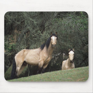 Wild Mustang Horses 6 Mouse Pad