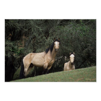 Wild Mustang Horses 6 Poster