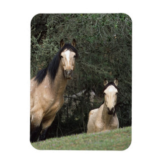 Wild Mustang Horses 6 Rectangle Magnet