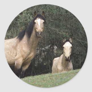 Wild Mustang Horses 6 Round Stickers