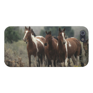 Wild Mustang Horses 7 Cover For iPhone SE/5/5s