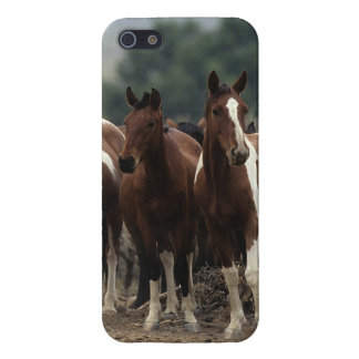 Wild Mustang Horses 7 iPhone SE/5/5s Case