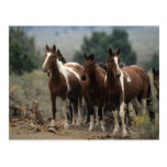 Wild Mustang Horses 7 Post Card