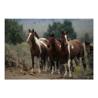Wild Mustang Horses 7 Poster