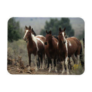Wild Mustang Horses 7 Rectangle Magnet
