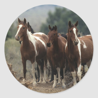 Wild Mustang Horses 7 Round Stickers