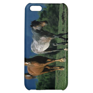 Wild Mustang Horses Case For iPhone 5C