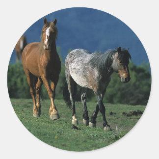 Wild Mustang Horses Classic Round Sticker