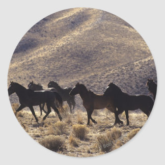 Wild Mustang Horses in the Desert 1 Classic Round Sticker