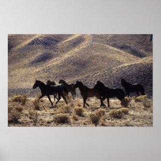 Wild Mustang Horses in the Desert 1 Poster