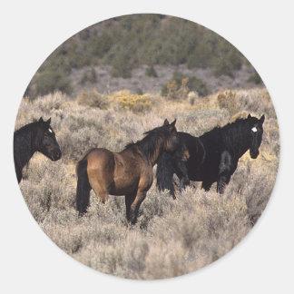 Wild Mustang Horses in the Desert 2 Classic Round Sticker