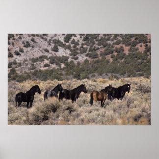 Wild Mustang Horses in the Desert 2 Poster