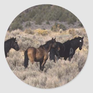 Wild Mustang Horses in the Desert 2 Round Stickers