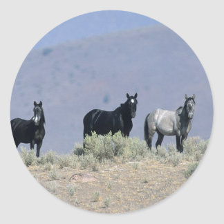 Wild Mustang Horses in the Desert 3 Classic Round Sticker