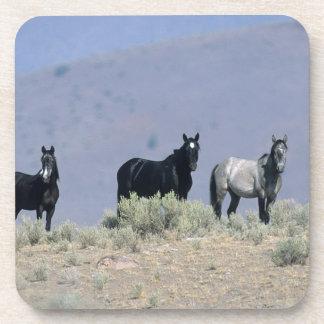 Wild Mustang Horses in the Desert 3 Drink Coaster