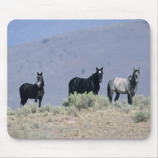 Wild Mustang Horses in the Desert 3 Mouse Pad