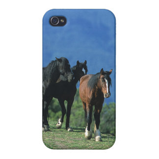 Wild Mustang Horses in the Mountains iPhone 4 Case