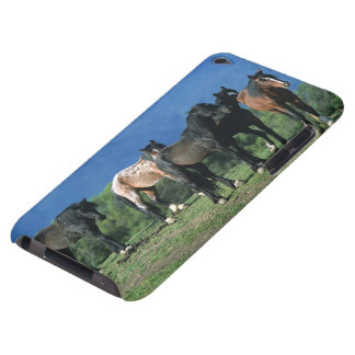 Wild Mustang Horses in the Mountains iPod Touch Cover