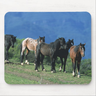 Wild Mustang Horses in the Mountains Mouse Pad