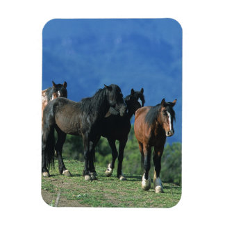 Wild Mustang Horses in the Mountains Flexible Magnets