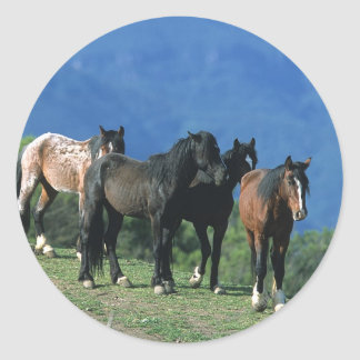 Wild Mustang Horses in the Mountains Round Sticker
