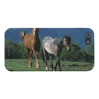 Wild Mustang Horses iPhone SE/5/5s Case