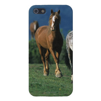 Wild Mustang Horses iPhone SE/5/5s Cover