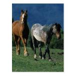 Wild Mustang Horses Post Card