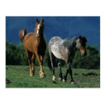 Wild Mustang Horses Postcards