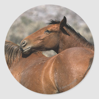 Wild Mustang Horses Touching Classic Round Sticker