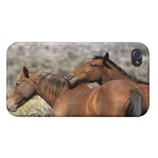 Wild Mustang Horses Touching iPhone 4 Cases