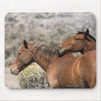 Wild Mustang Horses Touching Mouse Pad
