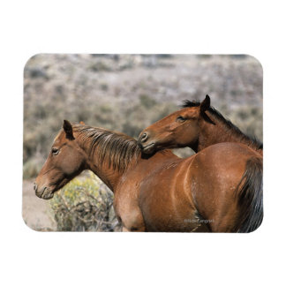 Wild Mustang Horses Touching Rectangle Magnets