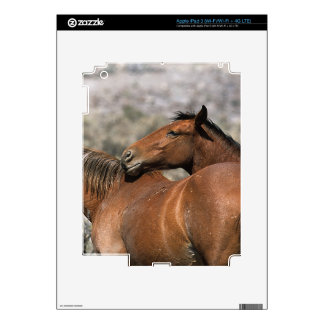 Wild Mustang Horses Touching Skin For iPad 3
