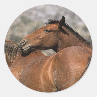Wild Mustang Horses Touching Sticker