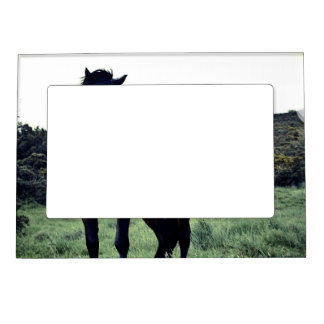 Wild Mustang Magnetic Frame