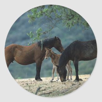 Wild Mustang Mare & Foal Classic Round Sticker