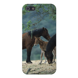 Wild Mustang Mare & Foal iPhone SE/5/5s Cover