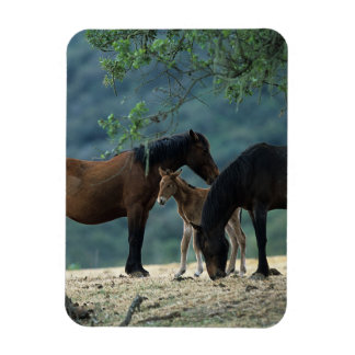 Wild Mustang Mare & Foal Magnet