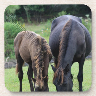 Wild Mustang Mare & Foal OBX NC Drink Coaster