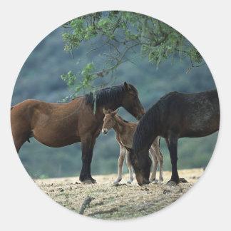 Wild Mustang Mare & Foal Sticker