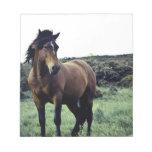 Wild Mustang Notepad