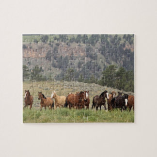 Wild Mustang Puzzle with Gift Box