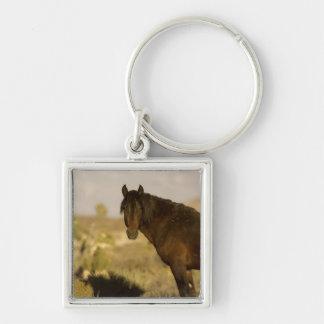 Wild Mustang stallion, Wheeler Peak herd, Cold Keychains