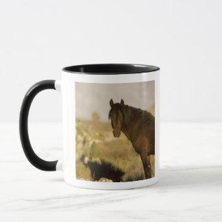 Wild Mustang stallion, Wheeler Peak herd, Cold Mug