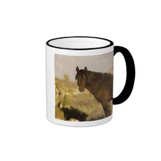 Wild Mustang stallion, Wheeler Peak herd, Cold Coffee Mug
