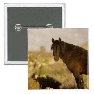 Wild Mustang stallion, Wheeler Peak herd, Cold Pinback Button