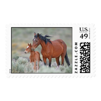 Wild mustangs at Altamont Pass Postage Stamps