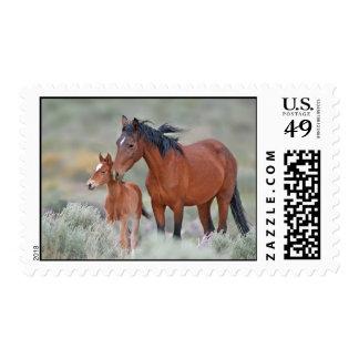 Wild mustangs at Altamont Pass Stamp