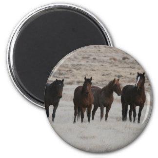 Wild Mustangs 2 Inch Round Magnet